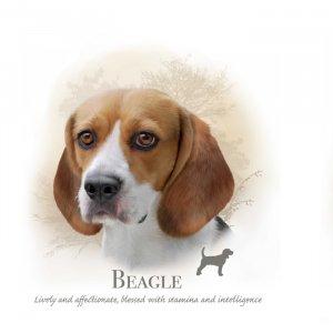 Honden en katten paneltjes