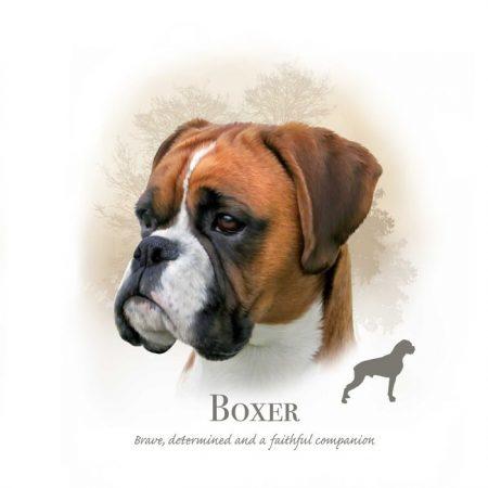 Prachtig paneltje van een hond van het Boxer ras wit bruin zwart