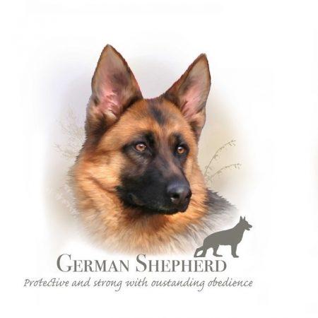 Prachtig paneltje van een hond van het Duitse herder ras bruin zwart
