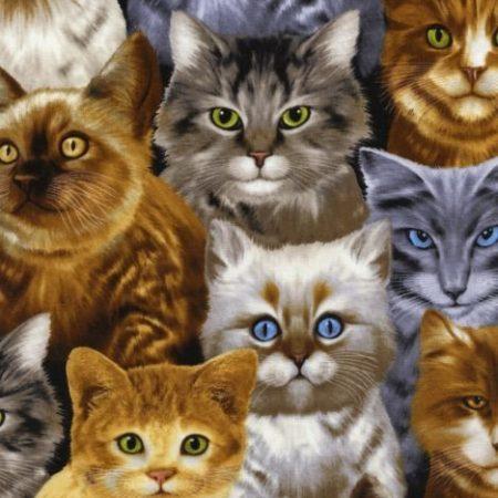Quiltstof katoen Katten 9820. Merk: Timeless Treasures