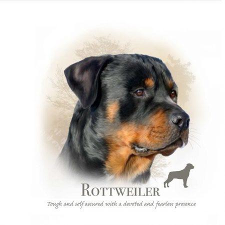 Prachtig paneltje van een hond van het Rottweiler ras zwart bruin