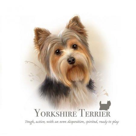 Prachtig paneltje van een hond van het Yorkshire Terrier ras bruin zwart