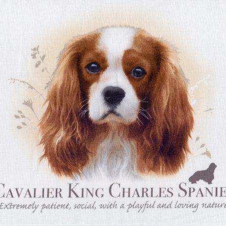 Prachtig paneltje van een hond van een Cavalier King Charles Spaniel