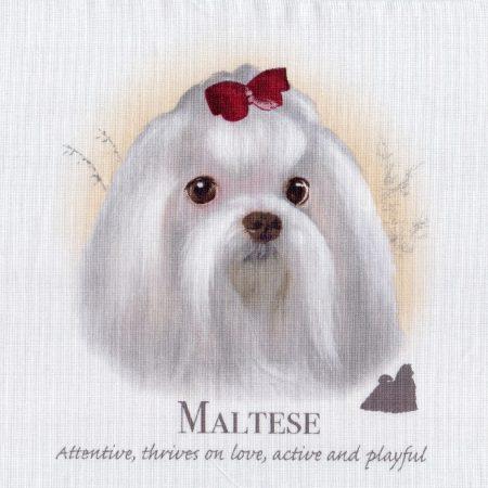 Prachtig paneltje van een hond van het Maltezer ras wit. Afm.: 2 x 20 cm