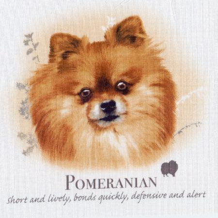 Prachtig paneltje van een hond van het Pomerian ras Dwergkees bruin