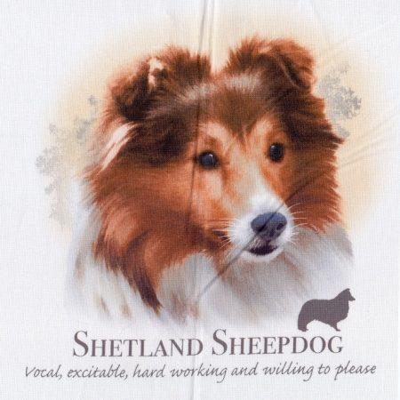 Prachtig paneltje van een hond van de Shetland Sheepdog. Sheltie ras