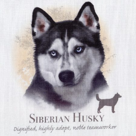 Prachtig paneltje van een hond van een Siberische Husky. Afm.: 20x20 cm