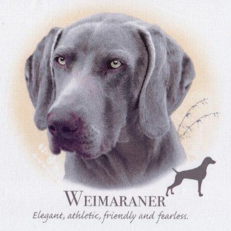 Prachtig paneltje van een hond van een Weimaraner. Afm.: 20 x 20 cm.