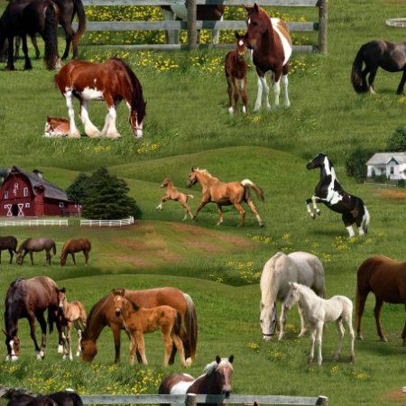 Quiltstof katoen paarden op de boerderij. Merk: Elizabeth's Studio