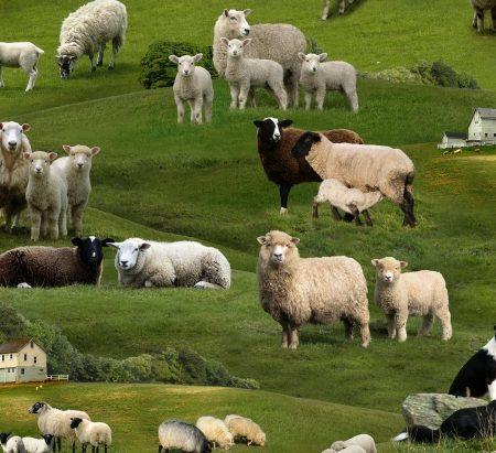Quiltstof katoen schapen op de boerderij 360. Merk: Elizabeth's Studio