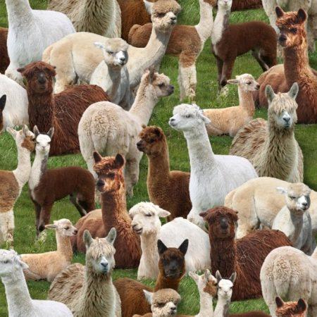 Quiltstof katoen alpaca op de boerderij. Merk: Elizabeth's Studio