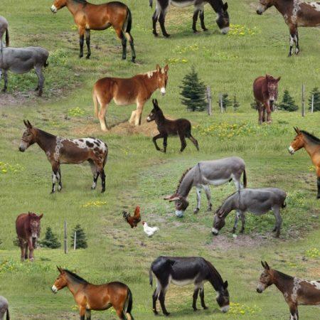 Quiltstof katoen ezels op de boerderij. Merk: Elizabeth's Studio