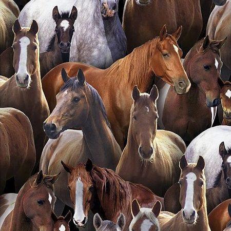Quiltstof katoen paarden allover. Merk: Elizabeth's Studio