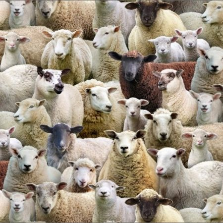 Quiltstof katoen schapen allover. Merk: Elizabeth's Studio