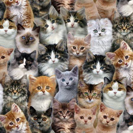 Quiltstof katoen Adorable Pets Kittens. Verkoop per 25 cm