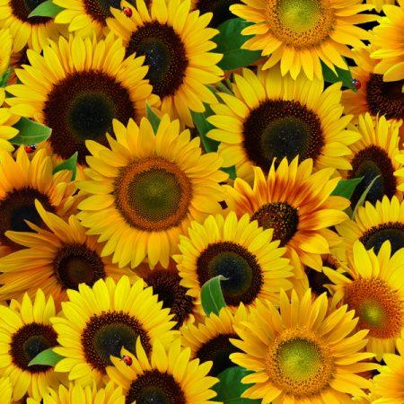 Quiltstof katoen Zonnebloemen. Verkoop per 25 cm