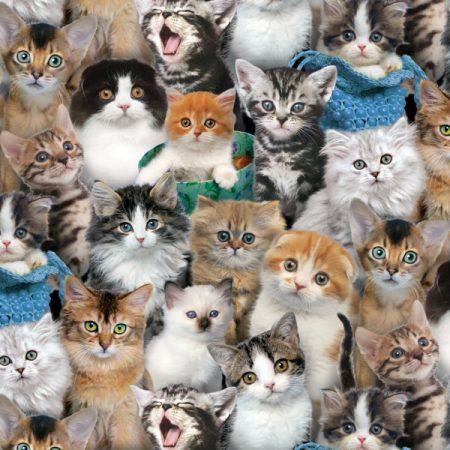 Quiltstof katoen Cat Breeds katten. Verkoop per 25 cm