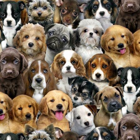 Quiltstof katoen Adorable Pets Honden 3800