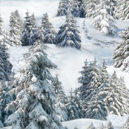 Quiltstof katoen Dennenbos in de sneeuw 215