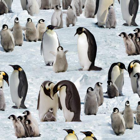 Quiltstof katoen Emperor Penguins 490